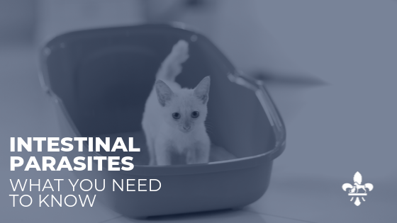 Kitten Parasite Protection: City Paws Veterinary Clinic