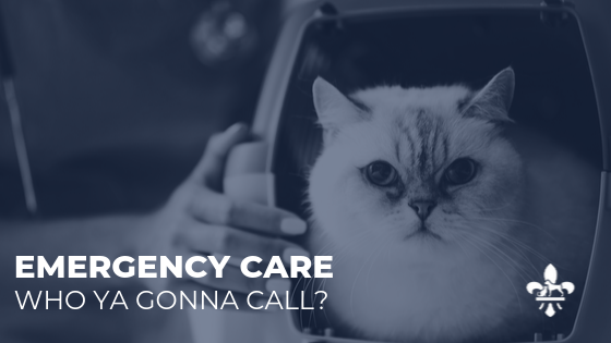 Pet Emergency Care in the St. Louis area
